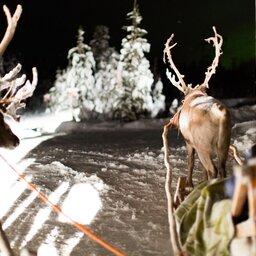 Finland-Zweden-Lapland-rendiersafari-nacht