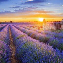 Frankrijk - Valensole - Provence
