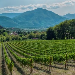 Griekenland-Peloponnesos-excursie-begeleide-wijntour-2