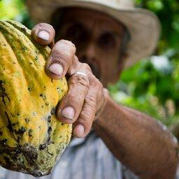 Guadeloupe-hoogtepunt-cacao-plukker