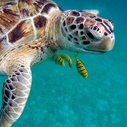 Guadeloupe-zeiltocht-op-zoek-naar-zeeschildpadden (1)