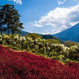 Guatemala - Antigua (5)