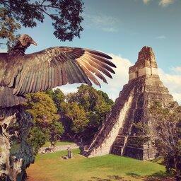 Guatemala - Tikal - Vogel