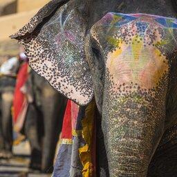 India-Jaipur-Olifanten
