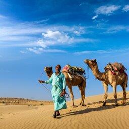 India-Rajasthan-Pushkar kamelen