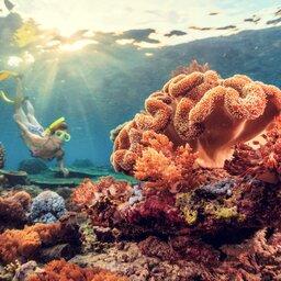 Indonesië-Bali-Menjangan snorkelen 2