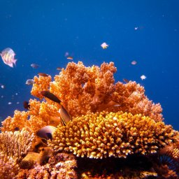 Indonesië-Bali-Menjangan snorkelen