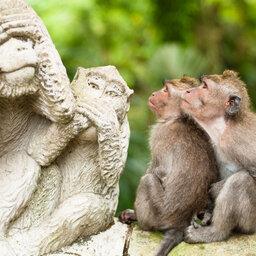 Indonesië-Bali-Monkey-Forest-3