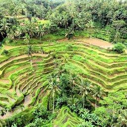 Indonesië-Bali-Ubud-algemeen-rijstvelden