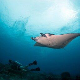 Indonesië-Flores-duiken