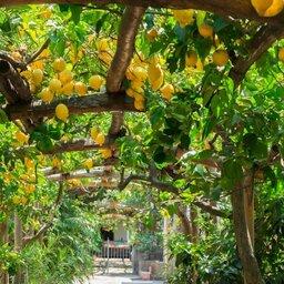 Italië-Amalfi-Excursie-Amalfi's-Lemon-Day-&-picknick-lunch-1