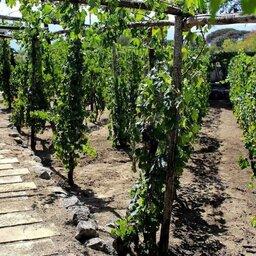 Italië-Amalfi-Excursie-Pompei-en-Vesuvio-visit-met-winetasting-en-lunch1