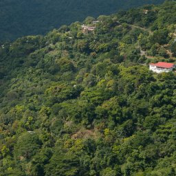 Jamaica-Blue Mountains (1)