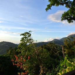 Jamaica-Blue Mountains (2)