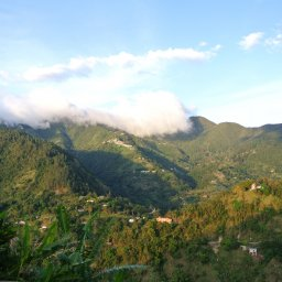 Jamaica-Blue Mountains (3)