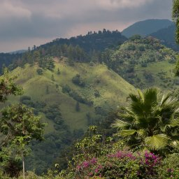 Jamaica-Blue Mountains (4)
