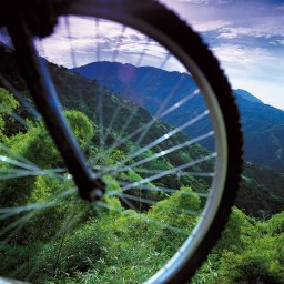 Jamaica-Blue Mountains (9)
