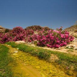 Jordanië-Dana reservaat-resized (6)