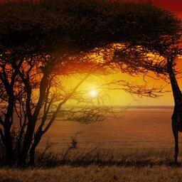 Kenia-algemeen-giraf (1)