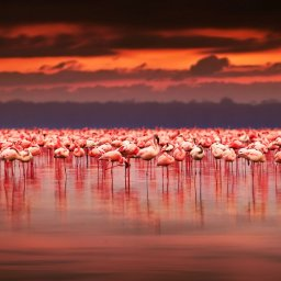 Kenia-Hoogtepunt3-Lake Naivasha & Lake Nakuru
