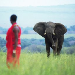 Kenia-Masai krijger-hoogtepunt 1 (7)