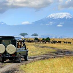 Kenia-Masai Mara-hoogtepunt-game drive