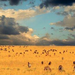 Kenia-Masai Mara NP-hoogtepunt (1)