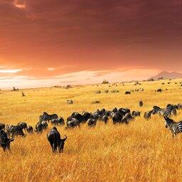 Kenia-Masai Mara NP-hoogtepunt (2)