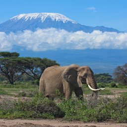 Kenia-Mount Kenya-hoogtepunt-olifant
