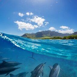 La Reunion-algemeen-dolfijnen