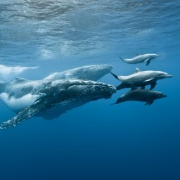 La-Reunion-westkust-excursie-cruise-walvis-dolfijnen-CREDIT-IRT-eric-lamblin 2
