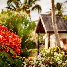 La-Reunion-westkust-iloha-seaview-hotel-bungalows