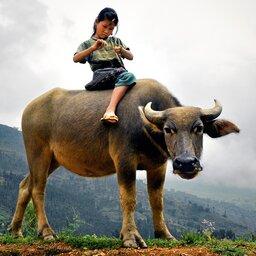 Laos-algemeen-kindje op beest