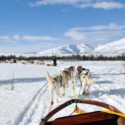 Lapland - Husky - Safari - Sneeuw (1)