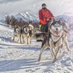 Lapland - husky slee (2)
