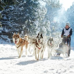 Lapland - husky slee