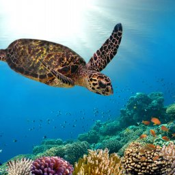 Malediven-Onderwaterwereld-snorkelen