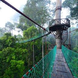 Maleisië-Danum-Vallei-Borneo-Rainforest-Lodge-canopy-3