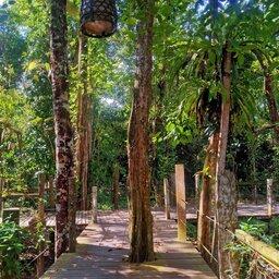 Maleisië-Kinabatangan-River-Sukau-Rainforest-Lodge-jungle