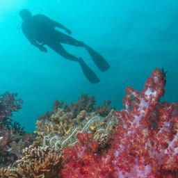 Maleisië-Kota-Kinabalu-Gaya-Island-Resort-duiken