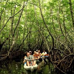 Maleisië-Kota-Kinabalu-Gaya-Island-Resort-mangrove-kajak