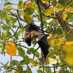 Mauritius-algemeen-Black River Gorges National Park (3)