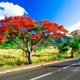 Mauritius-resized (31)
