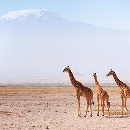 mini_Kenia-Amboseli-giraffen en zicht op Kilimanjaro