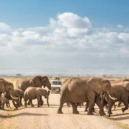 mini_Kenia-Amboseli-kudde olifanten