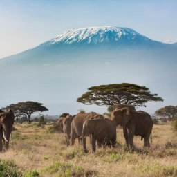 mini_Kenia-Amboseli-olifanten en Kilimanjaro