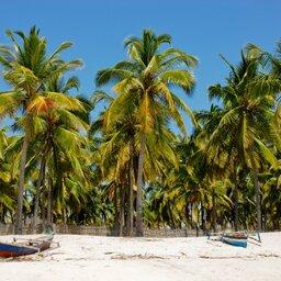 Mozambique-algemeen-strand met palmbomen