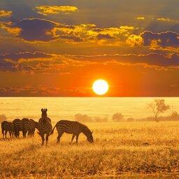 Namibië-algemeen-zebra's bij zonsondergang