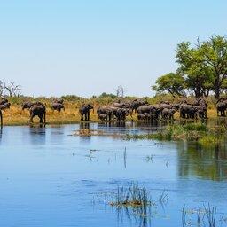 Namibië-Caprivi strip-hoogtepunt (1)