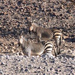 Namibië-Damaraland-hoogtepunt (1)